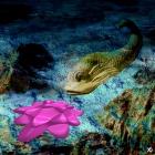 Lapis delphinus
